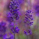 All in purple  by Nicole  Markmann Nelson