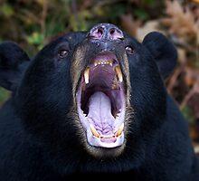 """""""You're not Yogi!!!"""" - Black Bear by Jim Cumming"""