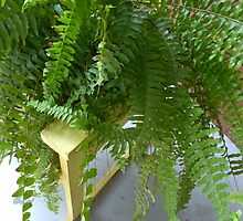 Boston Fern In The Chair by WildestArt