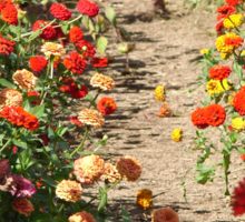 Path Through the Zinnia Field Sticker