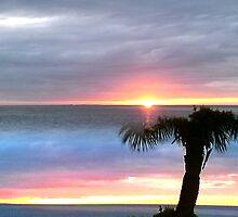 Tropical Florida by Ellen Turner