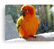 Do You Need A Little Sunshine In Your Life?... - Sun Conure - NZ Canvas Print
