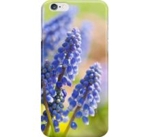 Blue Muscari Mill flowers close-up in the spring  iPhone Case/Skin