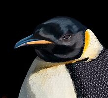Penguin by RoguePlanets