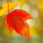 Last Leaves by Marilyn Cornwell