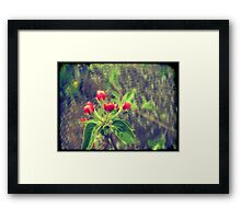 Pink Apple Blossom 2 Framed Print