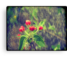 Pink Apple Blossom 2 Canvas Print