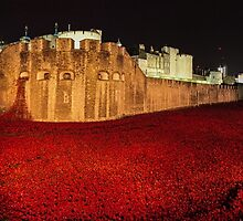 Poppies at theTower of London -  Night Panorama by InterestingImag