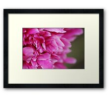 The Flower Framed Print