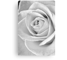 Beautiful Rose Black and White Canvas Print