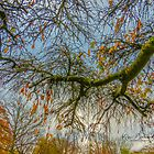 Blue Skies all day long by © Kira Bodensted