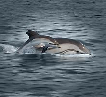 Striped Dolphins by Art-by-Aelia