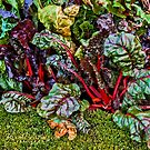 Colorful Cabbage by © Kira Bodensted