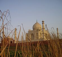 Taj Mahal - back view by Kath Cashion