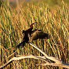 Snake neck bird by Mark Williamson