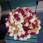 Roses Montmarte by adam
