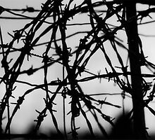 freedom by Mik Efford