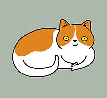 Special Cat... Ginger and White by zoel