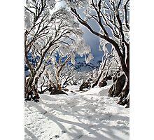Snowgums Photographic Print