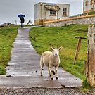 The sheep of Neist Point by JamesA1