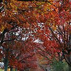 Colorful Canopy by Gilda Axelrod