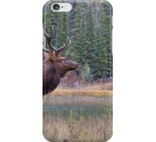 Nice Bull along the Bow iPhone Case/Skin