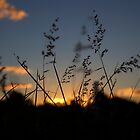 Sunset Grass by Esther Cole