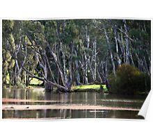 River Scene at Gunbower near Cohuna Poster