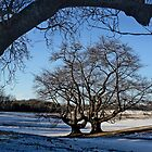 Cherry Trees in Winter by cclaude
