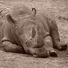 Baby Rhino by Michelle Shoosmith