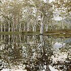 Gum Trees in Sheet Water 3 by mgimagery