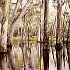 Gum Trees in Sheet Water 2 by mgimagery