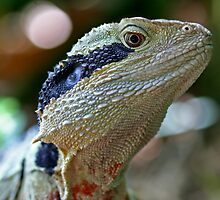Eastern Water Dragon by Mark Snelson