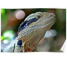 Eastern Water Dragon Poster