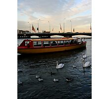 Swans on the Rhône Photographic Print