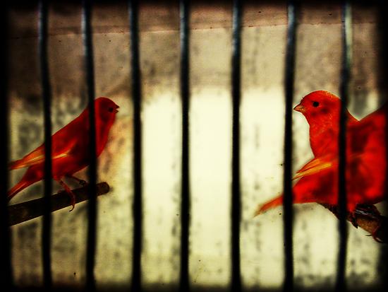 the cage by Matt Mawson