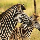 Kruger Mother and Foal by Jennifer Sumpton