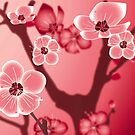 blossom by Lara Allport