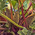 Big prickly plant by © Kira Bodensted