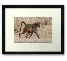 Baboon Family COMING Framed Print