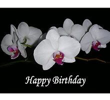 White Orchids Framed (Birthday Card) by C J Lewis