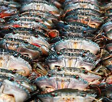 Crabs in a row by Stephen Colquitt