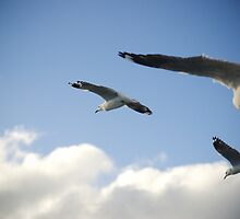 seagull squadron by Mik Efford