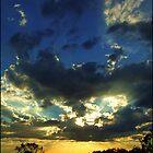 Ferntree Gully by webgrrl