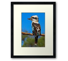 Laughing Kookaburra Framed Print