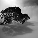 Snow Gums in the Clouds by John Barratt