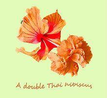 A double Thai hibiscus by DAdeSimone