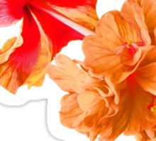 A double Thai hibiscus Sticker