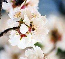 Flowering Almond and Friend by georgiegirl