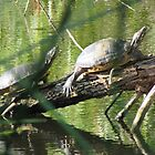 Turtles on Log by Ingasi